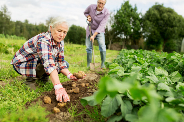 22 miliona ljudi u EU zaposleno je u poljoprivredi, ali na kakav ugovor?