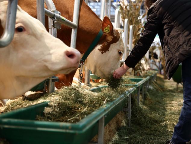 Eurotier - svjetski sajam stočarstva u Hannoveru