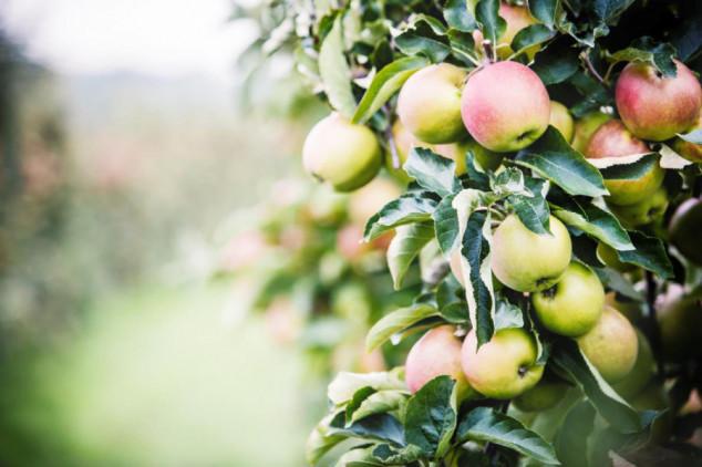 Tehnologija kokristala u zaštiti jabuke!