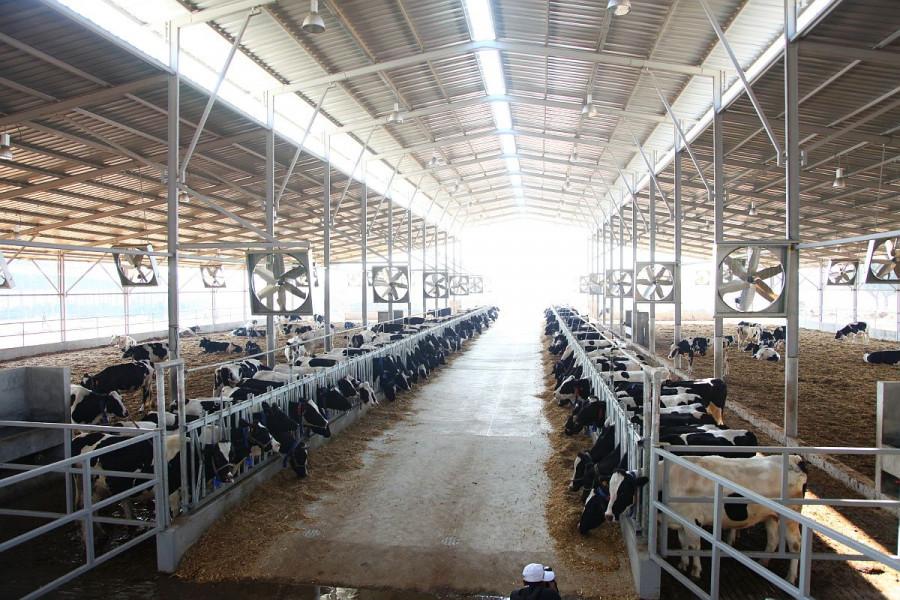 Veći prinosi i prihod uz sustav hlađenja farmi
