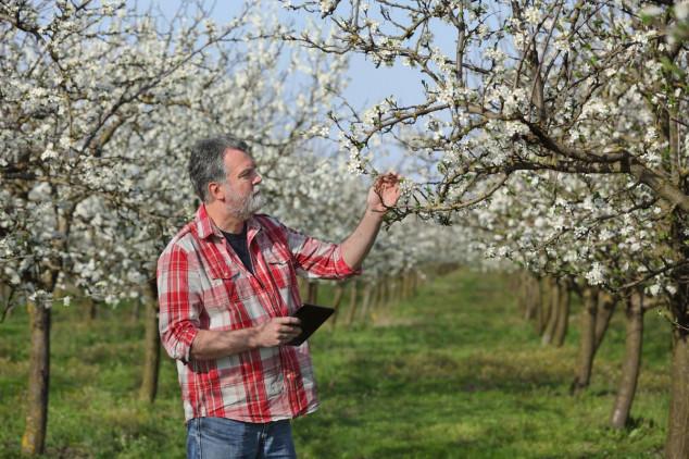 Pravilnim planiranjem do zaštite voća!