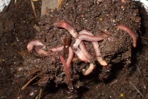 Ekološka proizvodnja humusa