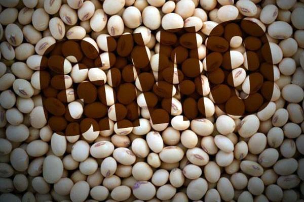 GMO soju smemo da jedemo, ali ne i da proizvodimo?!