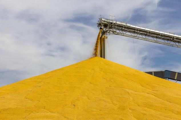 16 EU država protiv GMO