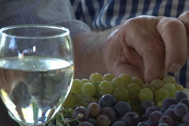 Dramatično stanje na tržištu grožđa