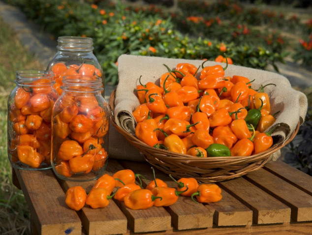 "Habanero: ""kineska paprika"" iz Meksika"