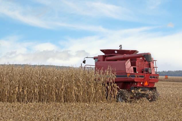 Rekordan start sezone kukuruza u Rusiji