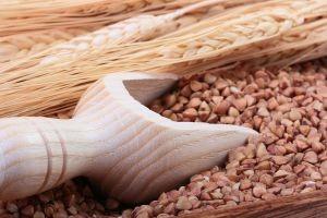 Predavanje o heljdi - sve popularnijoj žitarici
