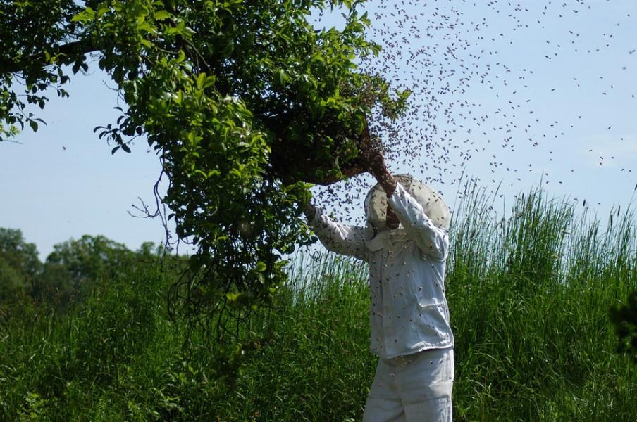 Od 41 pčelinjeg društva, ostalo je samo jedno