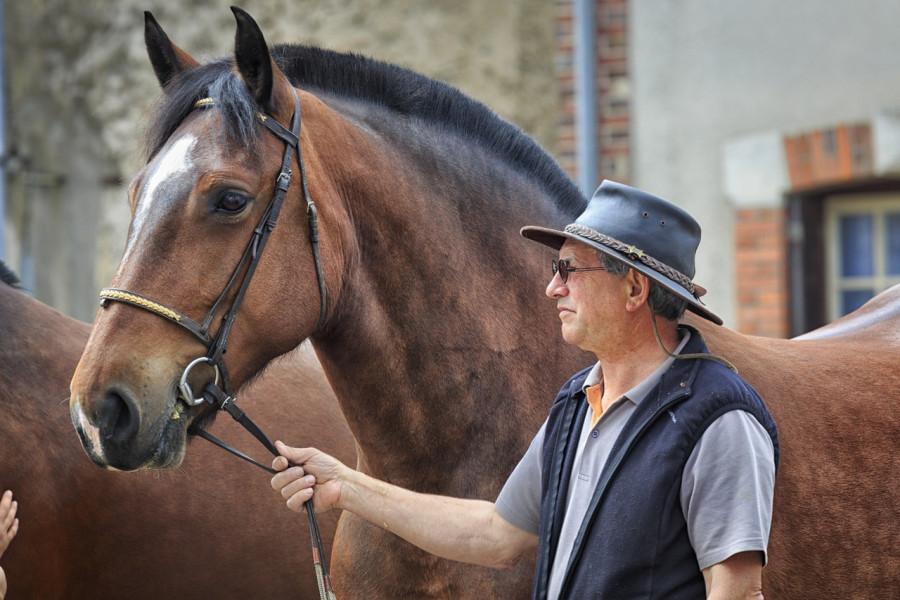 Prijavite se za potpore uzgoju konja