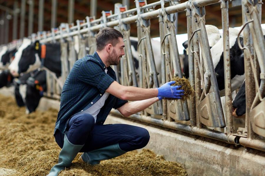 """Želite hraniti stoku hranom koja """"Ne sadrži GMO""""?"""