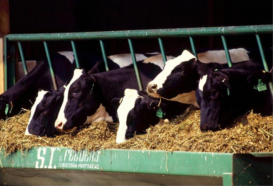 Mikotoksini u proizvodnji mlijeka - kako ih spriječiti