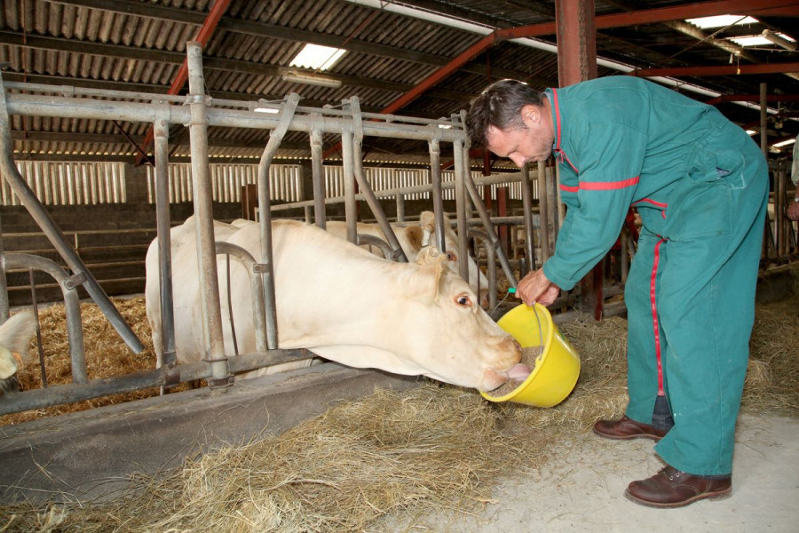 Povratak hranidbi kao ključnom segmentu očuvanja zdravlja i otpornosti životinja