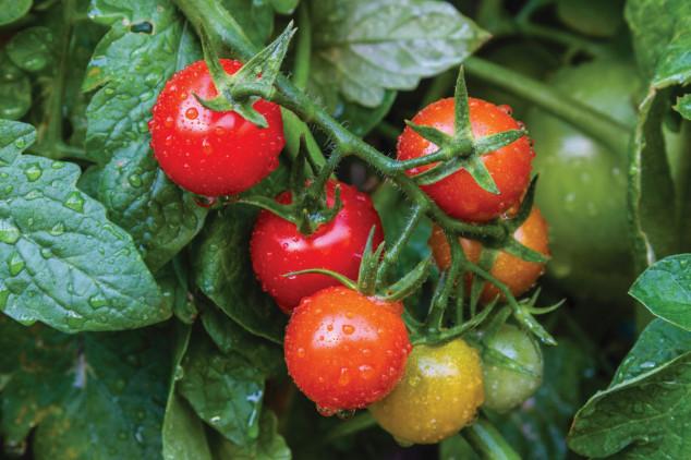 Agroleaf Power folijarna gnojiva za jače biljke!