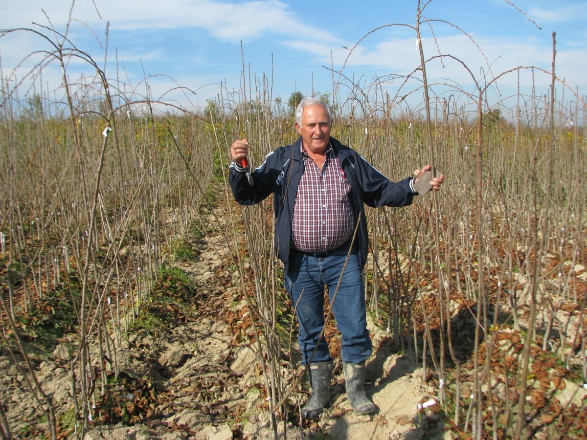 Tov teladi – isplativa grana poljoprivrede (46354)
