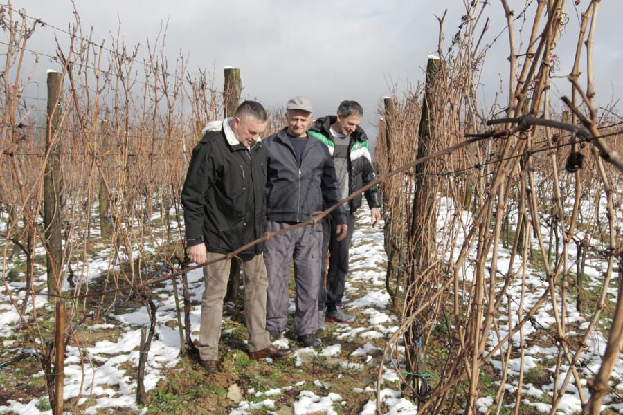 Laktaši će se brzo naći na mapi najboljih vinogorja