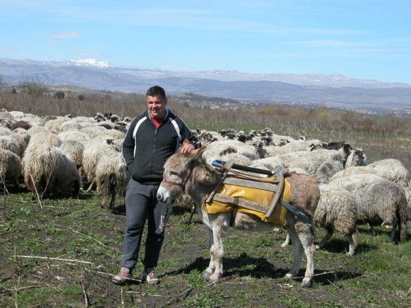Ovčarska farma podno Cetine na eko način!
