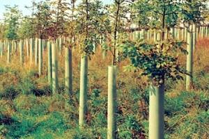 Cjelovita zaštita mladih sadnica