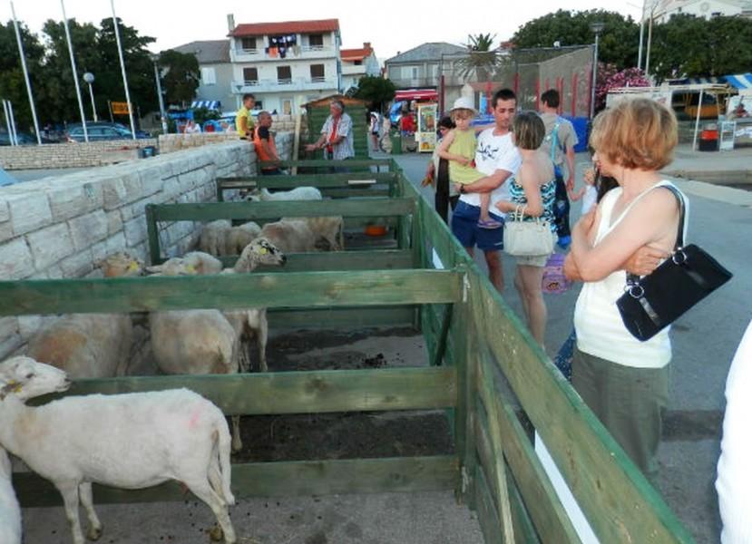Izložba paške ovce i paškog sira