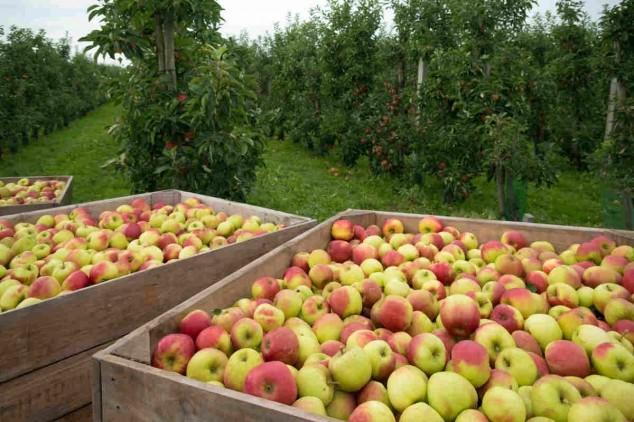 Rusija: u voću i povrću iz Srbije previše pesticida