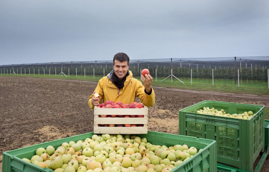 TOP destinacije svjetske trgovine jabukama