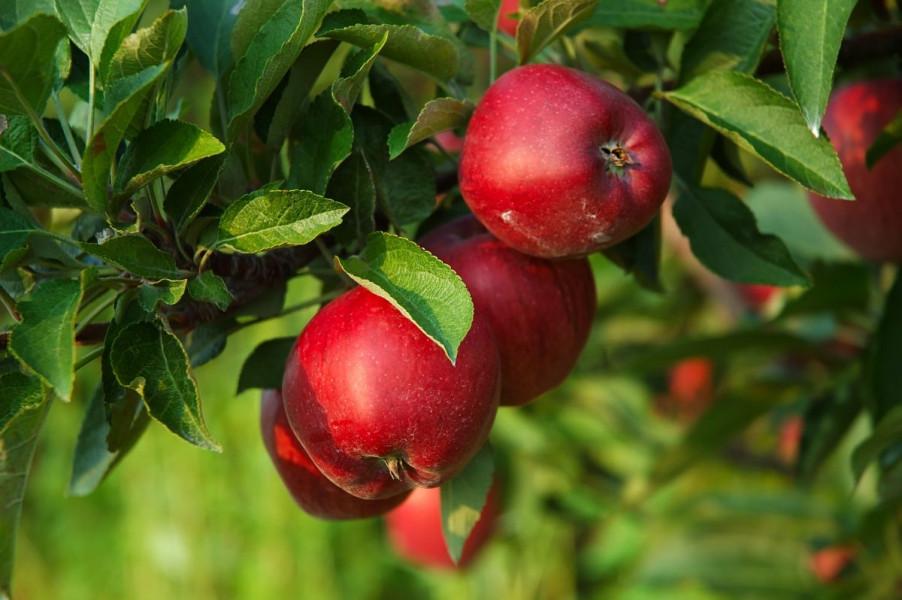 Javnost o potporama za jabuke i mandarine