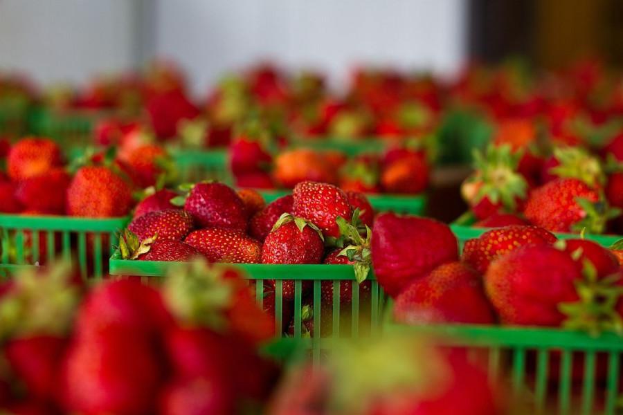 Bespovratnih 1,1 milion KM za uzgoj jagodastog voća