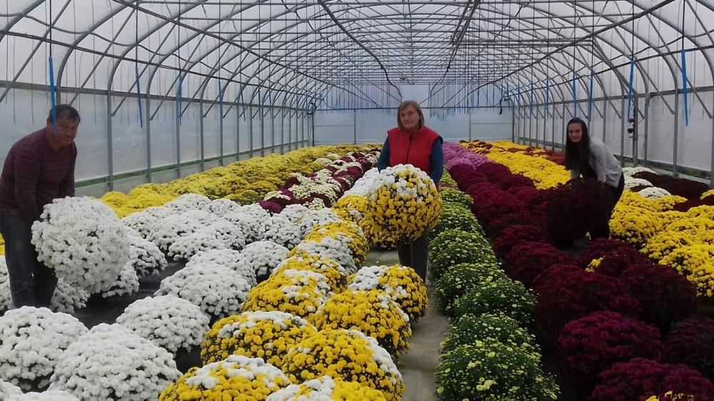 Raste i uvoz i izvoz cvijeća, ali i svijeća