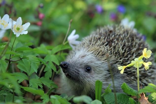 Životinje kao pomoćnici u bašti