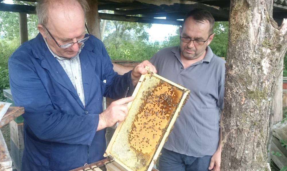 Klimatske promjene pogoduju pčelarima, šuma odlično medi