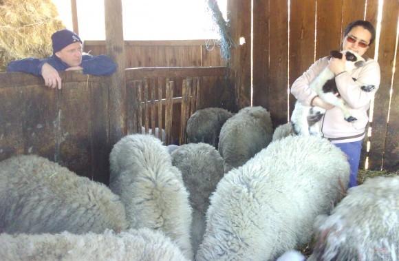 Složna obitelj farmu gradi - a nesložna ruši!