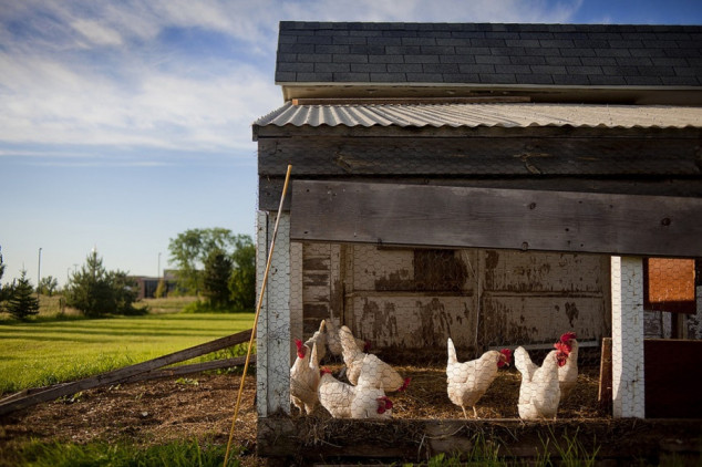 Ideje za izgled i funkcionalnost kokošinjca