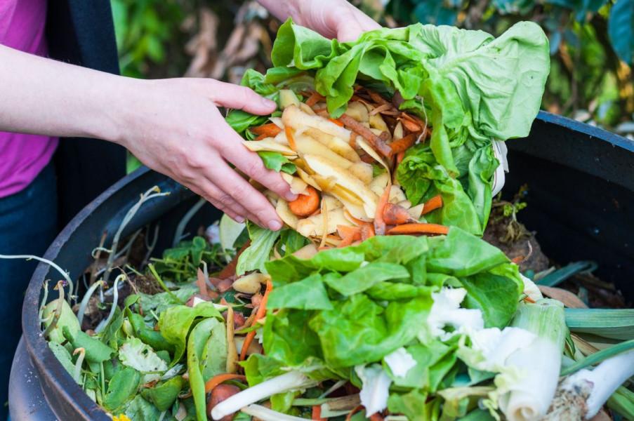 Kompostni čaj - đubrivo i zaštita za biljke