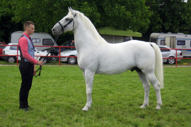 Prijavljeno 213 priplodnih grla konja