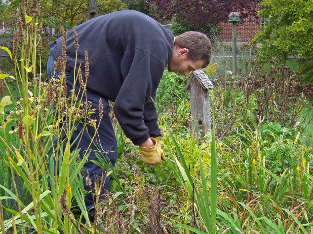 Zašto ne treba čupati korov u bašti?