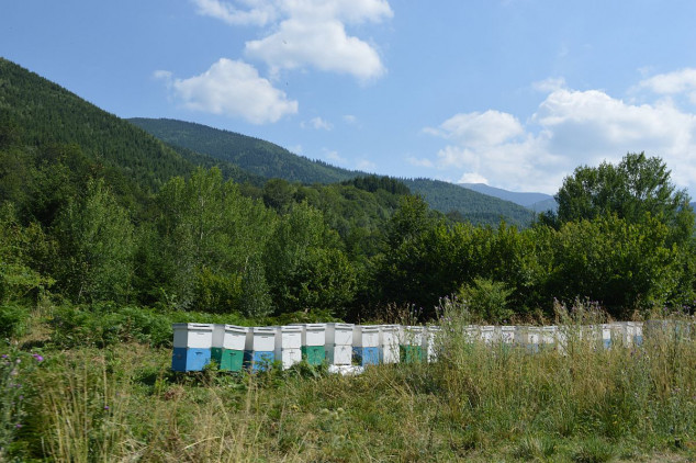 Formiran tim za sprečavanje krađe pčela