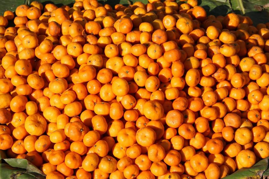 Ukradene mandarine, pribor za ribolov, drva za ogrijev