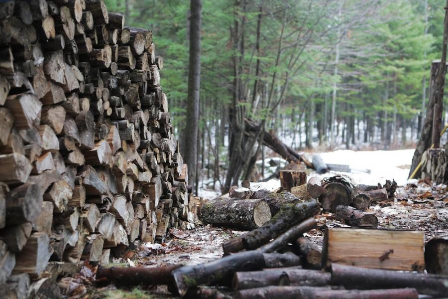 Kamerama protiv krađe šume!