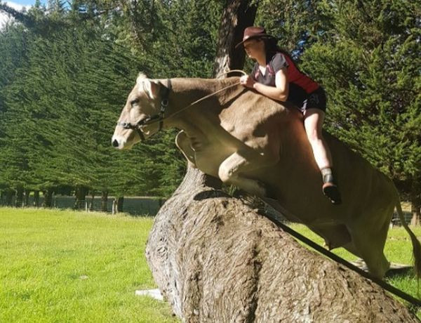 Htjela je ponija, a dobila kravu!