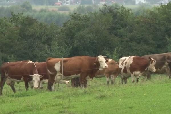 Bihać - grad mlijeka