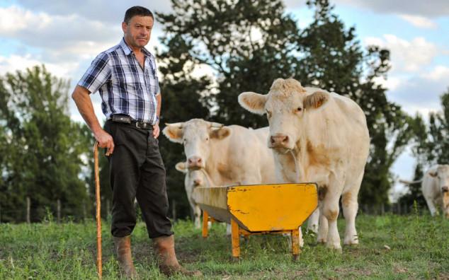 Manji broj slučajeva kravljeg ludila u 2015. godini