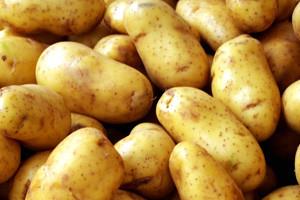 Sadnja, uzgoj krumpira i primjena Plants Protector Thiofera