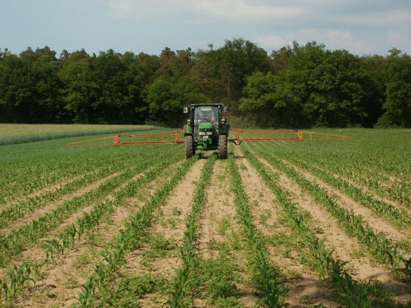 Crveno svjetlo od EU za GMO kukuruz i pamuk