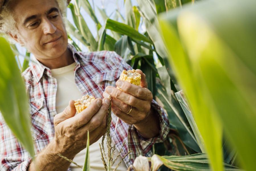 Kukuruzni moljac - prijetnja i povrću i cvijeću
