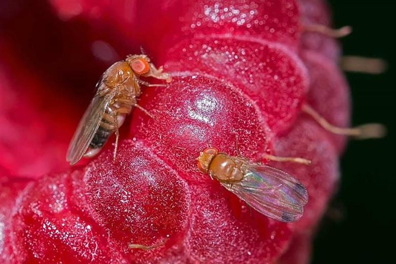 Jedini pravi insekticid dozvoljen u eko proizvodnji