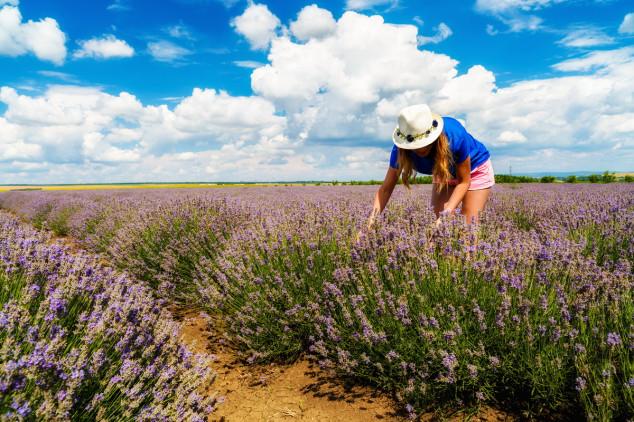 Od mediteranskog bilja do čajeva i kozmetike