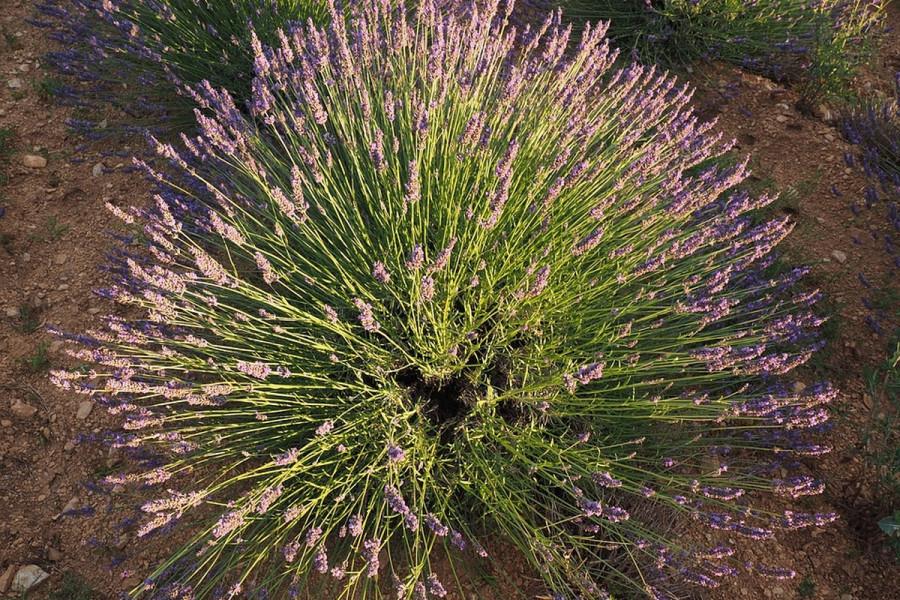 Dekorativne biljke za zimske dane