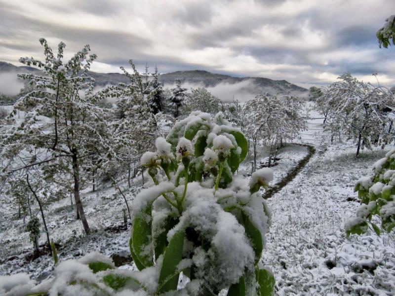 Eko metode oporavka biljaka nakon ledenog talasa