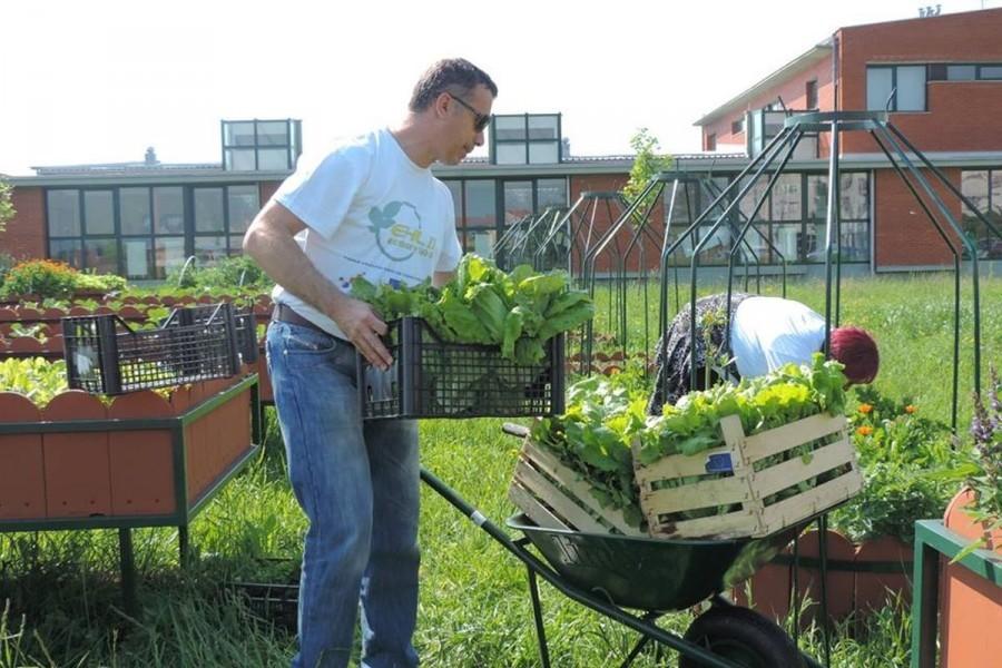 Udruga Loco moto proizvodi organsko povrće