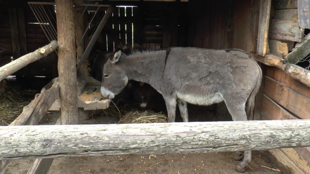 Dan magaraca - promocija delikatesa